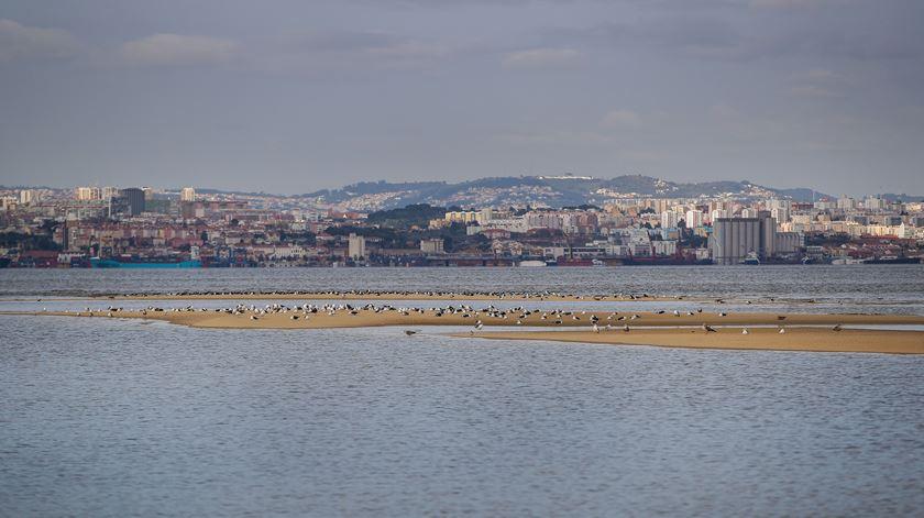 Aeroporto do Montijo só avança depois de resolvidos problemas ambientais, diz António Costa