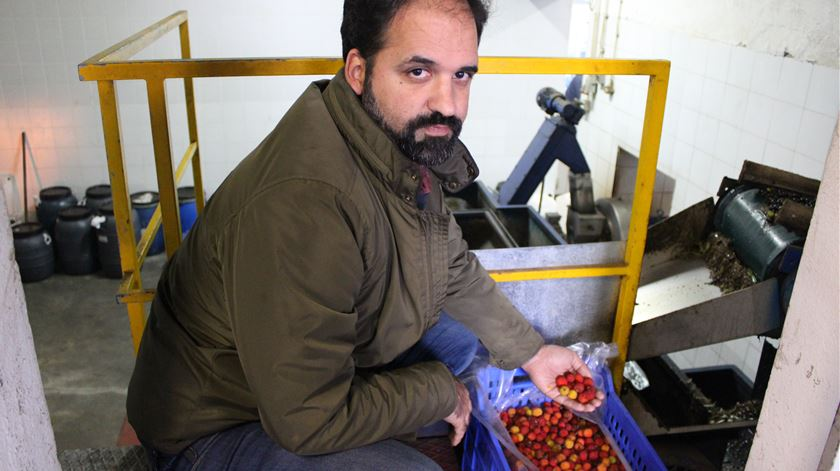 Nuno Pereira, o agricultor inivador. Foto: Liliana Carona/RR