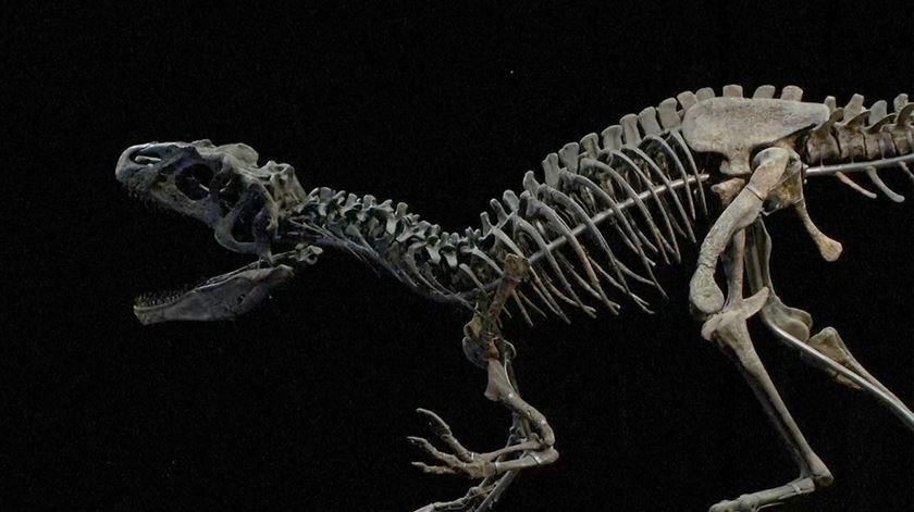 Fósseis de dinossauros leiloados por mais de um milhão de euros