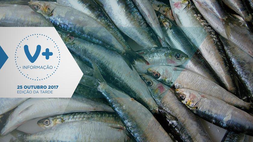 Pesca da sardinha proibida no Norte e Centro?