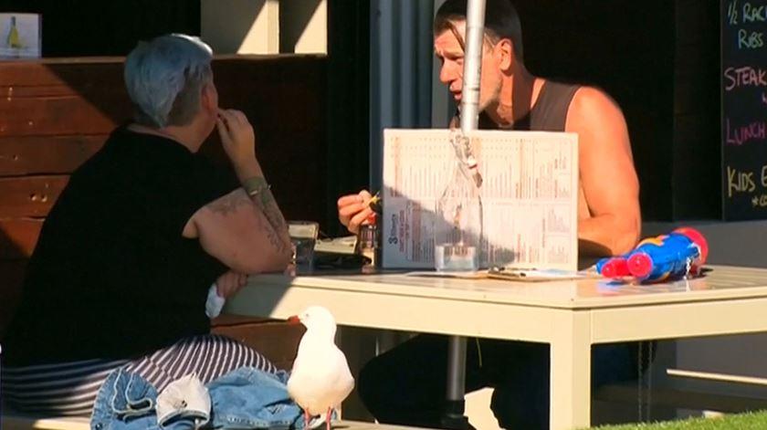 Restaurante australiano oferece pistolas de água para afugentar gaivotas