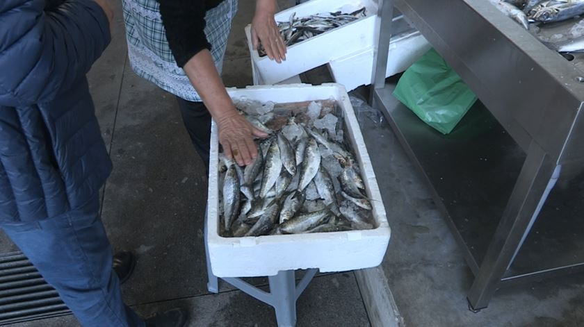 """Pescadores e o fim da pesca da sardinha. """"Para onde vamos trabalhar? Para casa da ministra?"""""""