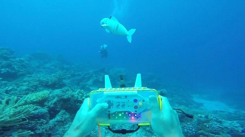 SoFi, um peixe robot para estudar a vida marinha