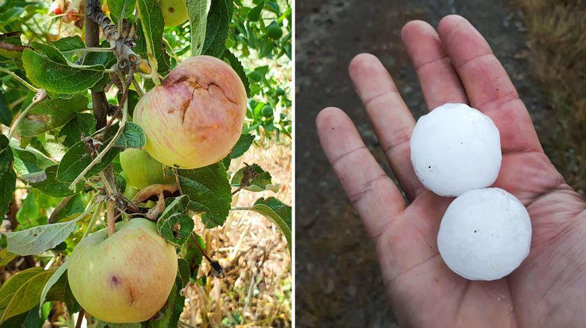 """Granizo do tamanho de """"ovos de galinha"""" arrasa colheitas em Mogadouro"""