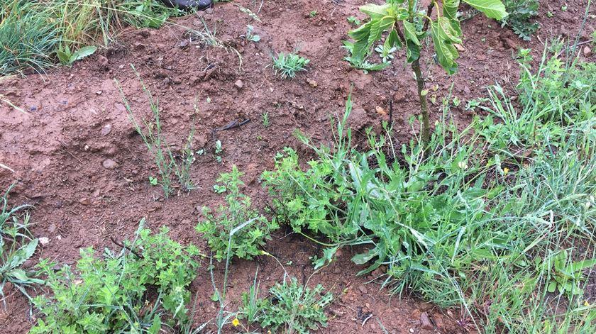 Novas plantações. Foto: Facebook
