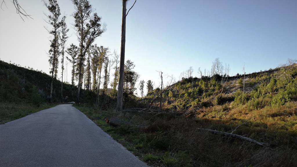 Pinhal de Leiria 3 anos depois do incêndio de 2017 (2020) Foto: Teresa Paula Csta/RR