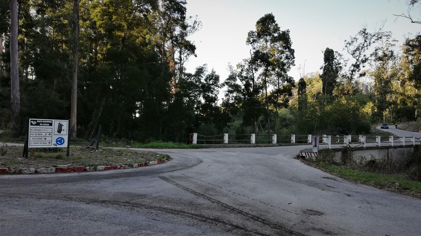 Pinhal de Leiria. Vai ser preciso plantar árvores em mais dois mil hectares