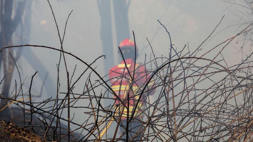 PJ deteve homem desempregado de 42 anos suspeito de atear fogo florestal em Coimbra