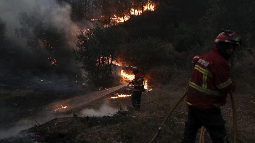 Mais de 220 operacionais combatem fogo em Vale de Cambra