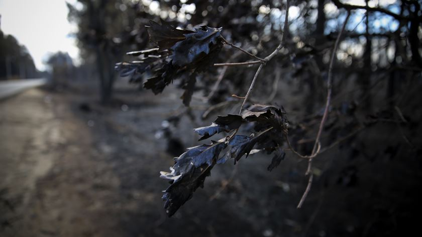 Incêndios. Associação de vítimas critica apoios à agricultura e deixa apelo