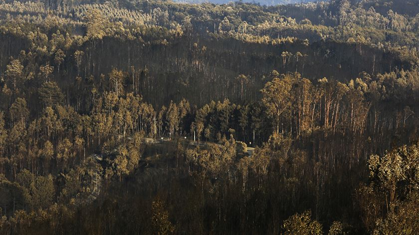 Há 970 ligações por restabelecer nas zonas afetadas pelos incêndios