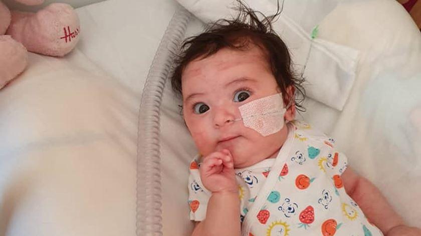 Matilde em recuperação após cirurgia. Foto: Facebook