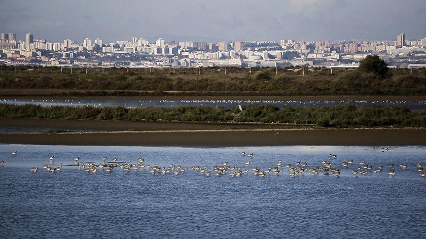 Aeroporto do Montijo. Um projeto que põe aviões a partilhar Estuário do Tejo com milhares de aves