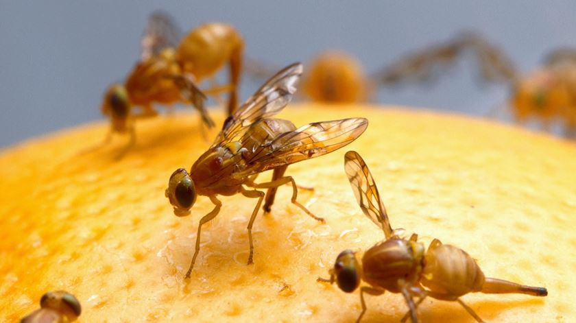 Entre 400 e 900 gramas. Os insetos que comemos... sem saber
