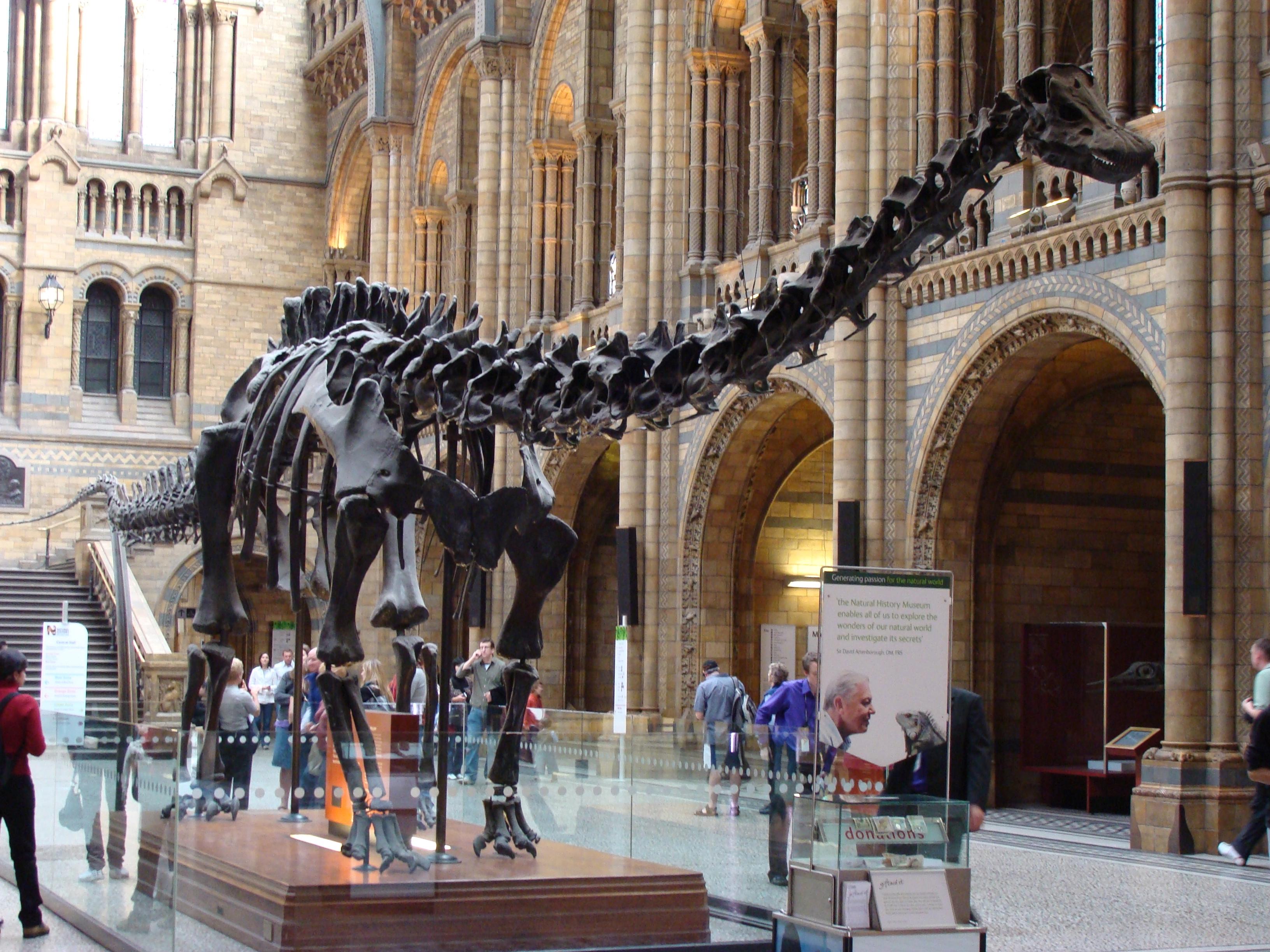 Menino com autismo corrige erro em exposição sobre dinossauros