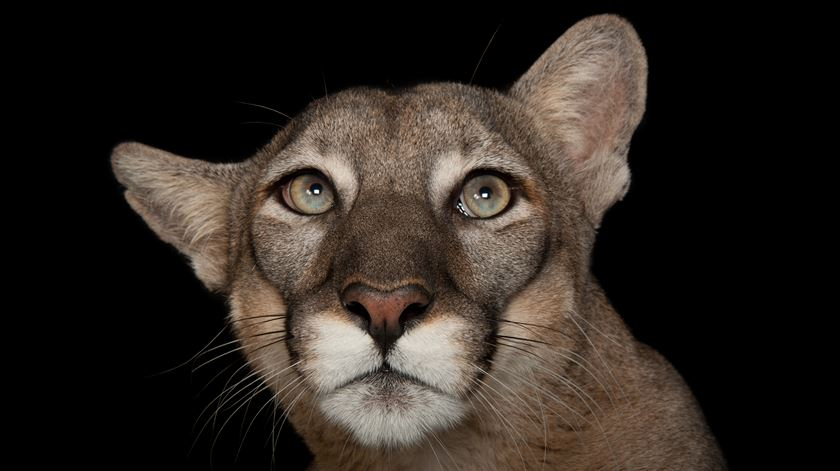 Joel Sartore conta-lhe como fotografa os animais do projecto Photo Ark