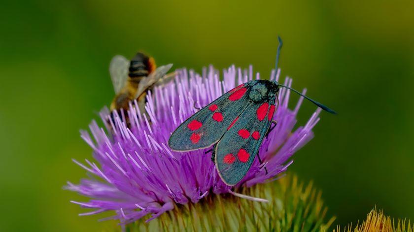 Há 200 milhões de insetos por cada ser humano