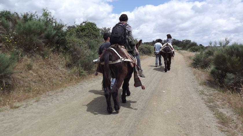 É possível passear num burro mirandês. Foto Olímpia Mairos/ RR