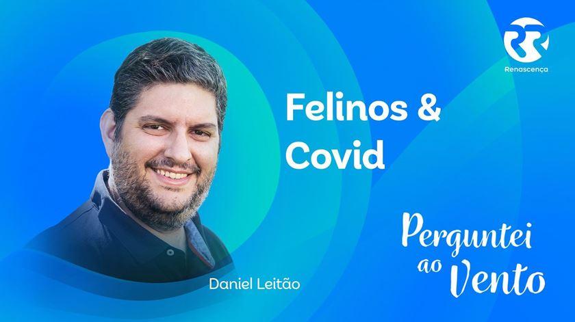 Felinos & Covid - Perguntei Ao Vento