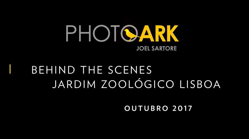 Photo Ark - Nos bastidores da sessão fotográfica no Jardim Zoológico de Lisboa