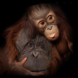 ​National Geographic traz Joel Sartore e Photo Ark a Portugal