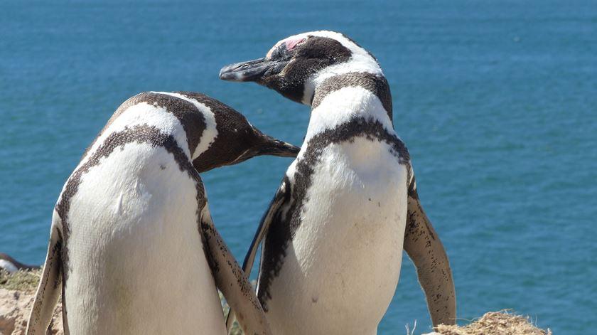 Com o calor, só me apetecia ser Pinguim… de Humboldt!