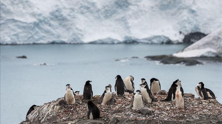 O janeiro mais quente e recorde de temperatura na Antártida