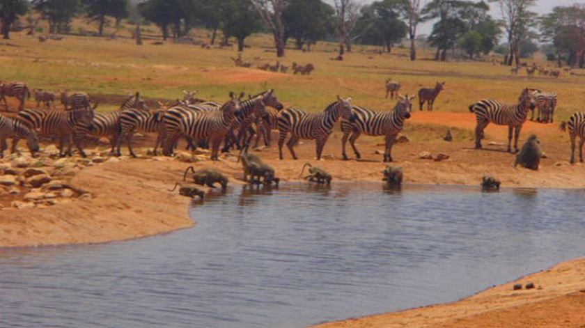 12.000 litros. Agricultor queniano faz 70 quilómetros para dar água aos animais