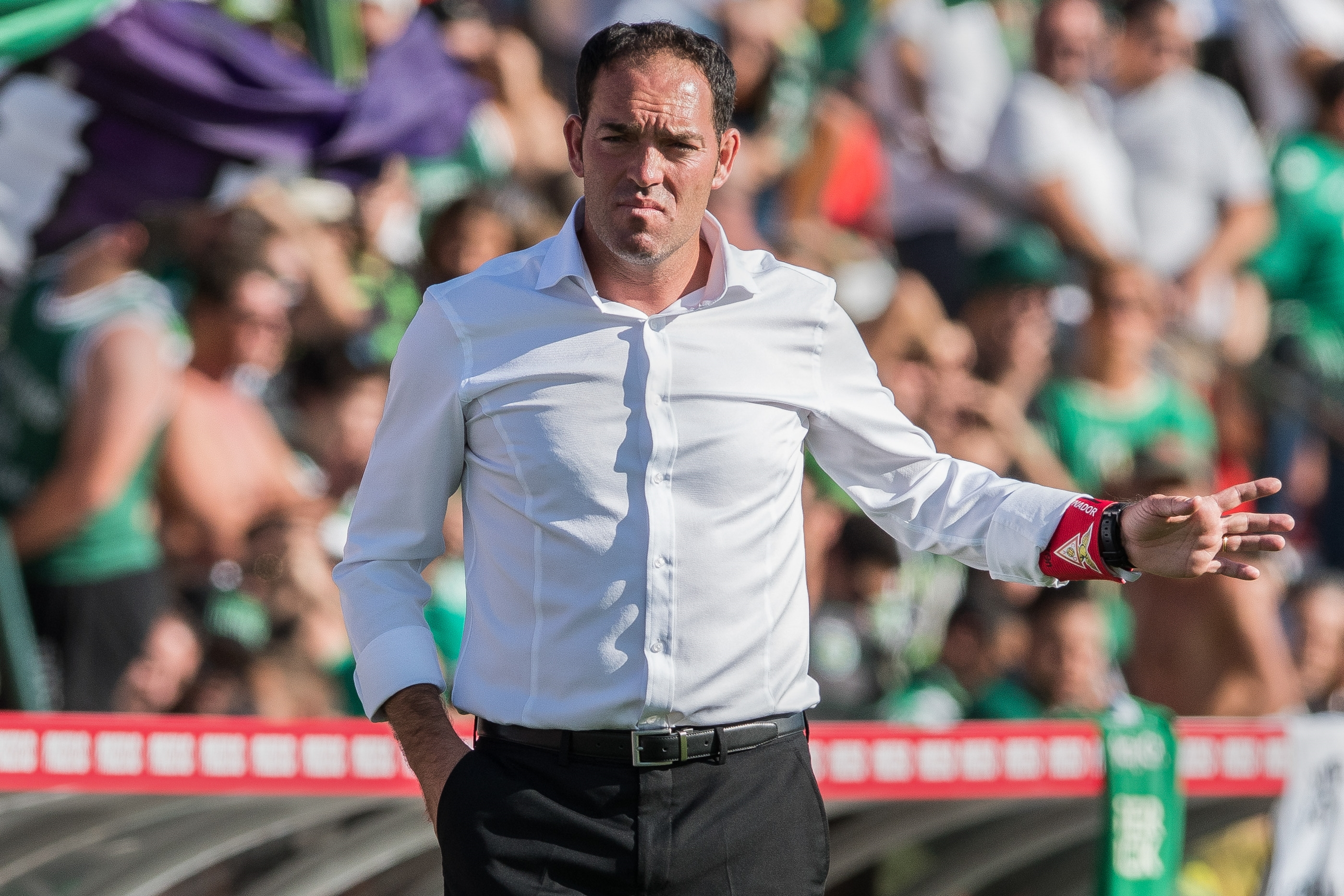Aves oficializa Lito Vidigal como treinador - Jornal de Notícias