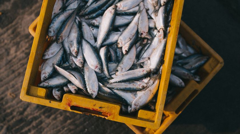 Apoios ao setor das pescas com 180 candidaturas aprovadas