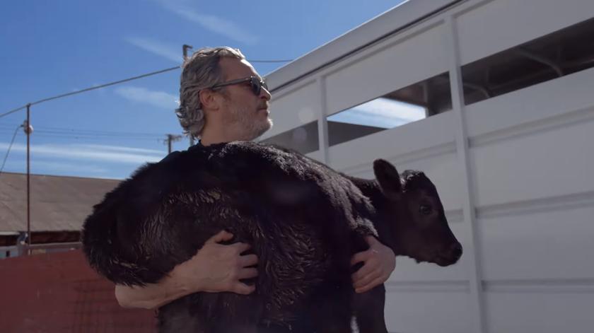 Joaquin Phoenix resgata vaca e bezerro dias após discurso ativista nos óscares