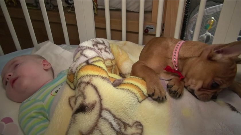 Conheça Havana, a cadela terapeuta que ajuda crianças com deficiências graves