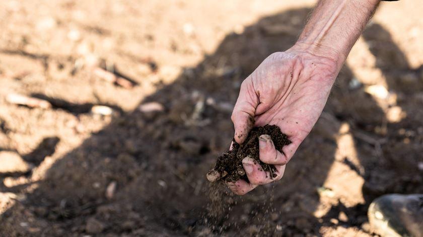 Estado fracassou no programa de combate à desertificação do solo