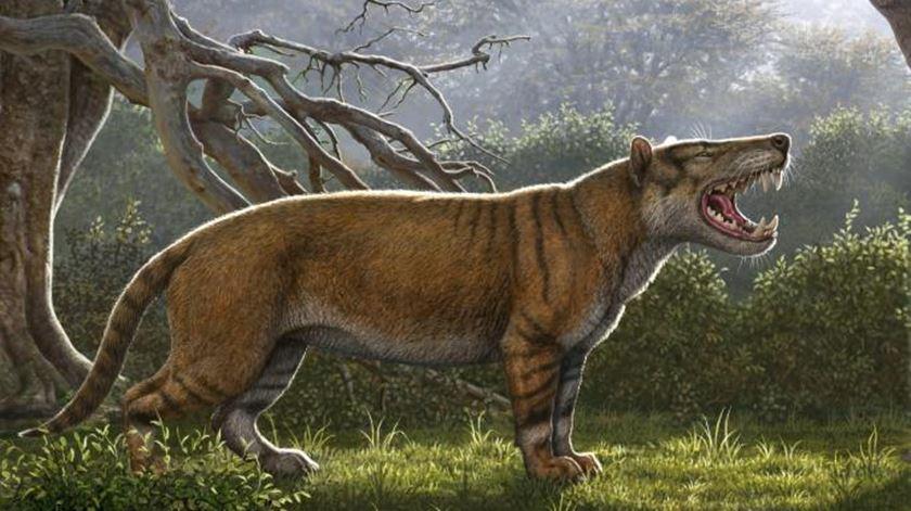 """Nova espécie de """"grande leão"""" descoberta na gaveta de um museu"""