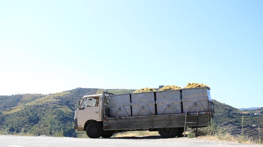 Douro. A seca antecipou as vindimas e pode mudar-lhe a paisagem