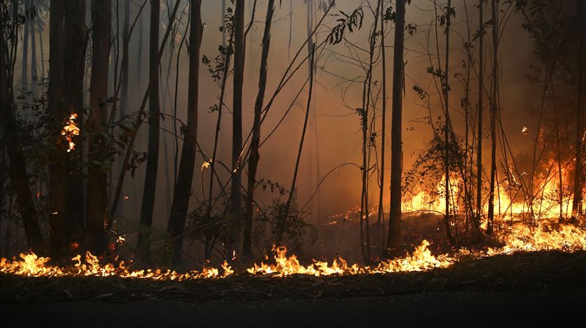 Incêndio cortou auto-estrada. Foto: Joana Bourgard/RR