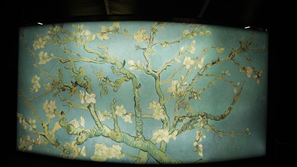 Amendoeira em Flor - Meet Vincent Van Gogh