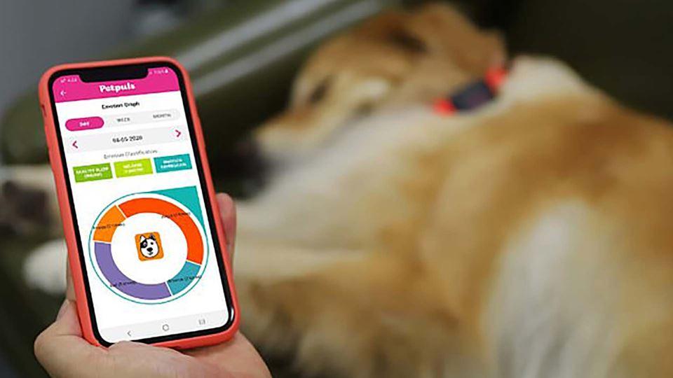 Aplicação da coleira que descodifica o ladrar dos cães