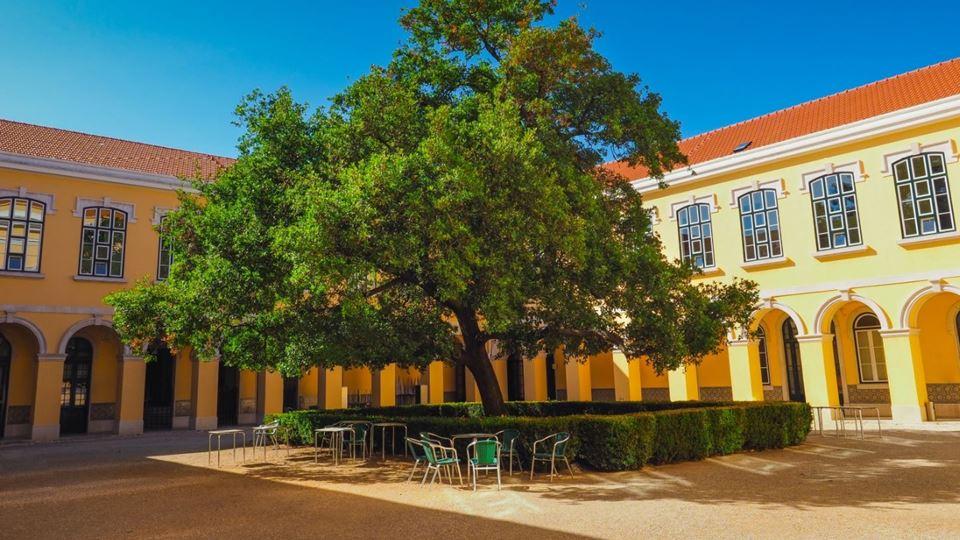 3º lugar Quercus do ISA em Lisboa. Foto de Mariana Castro