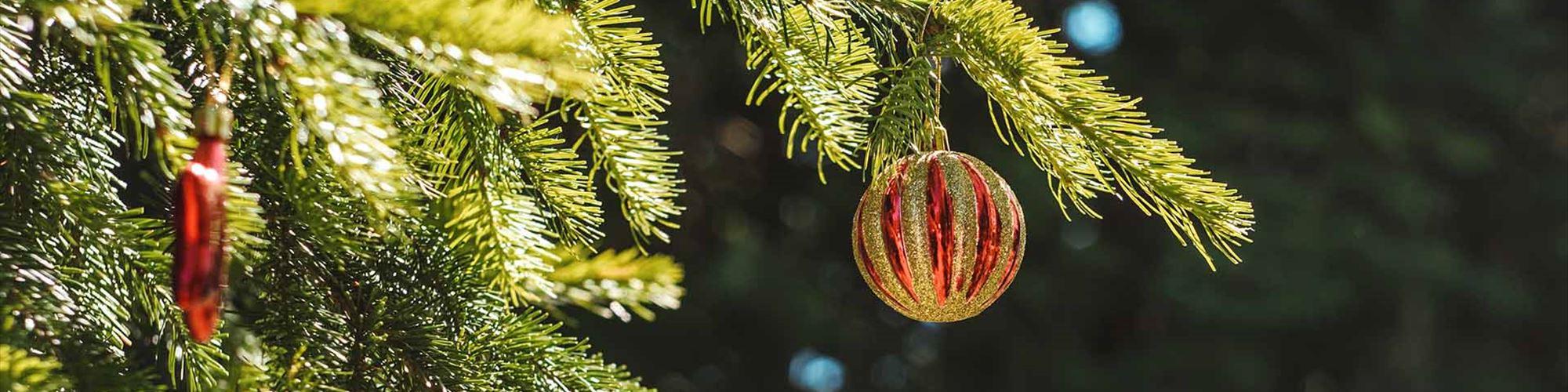 Ao comprares estas árvores de Natal, estás a dar uma nova vida ao pinhal de Leiria