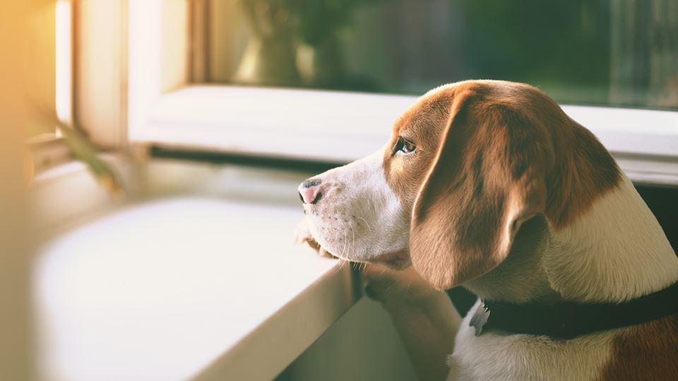 São os cães que sofrem mais co...