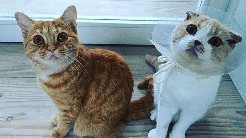 Calippo e Dorito: os gatos do ...