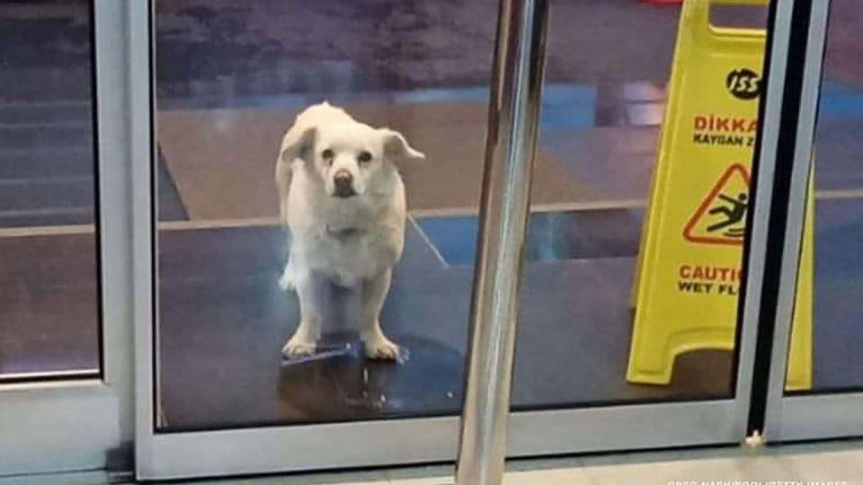 Cadela espera pacientemente pe...