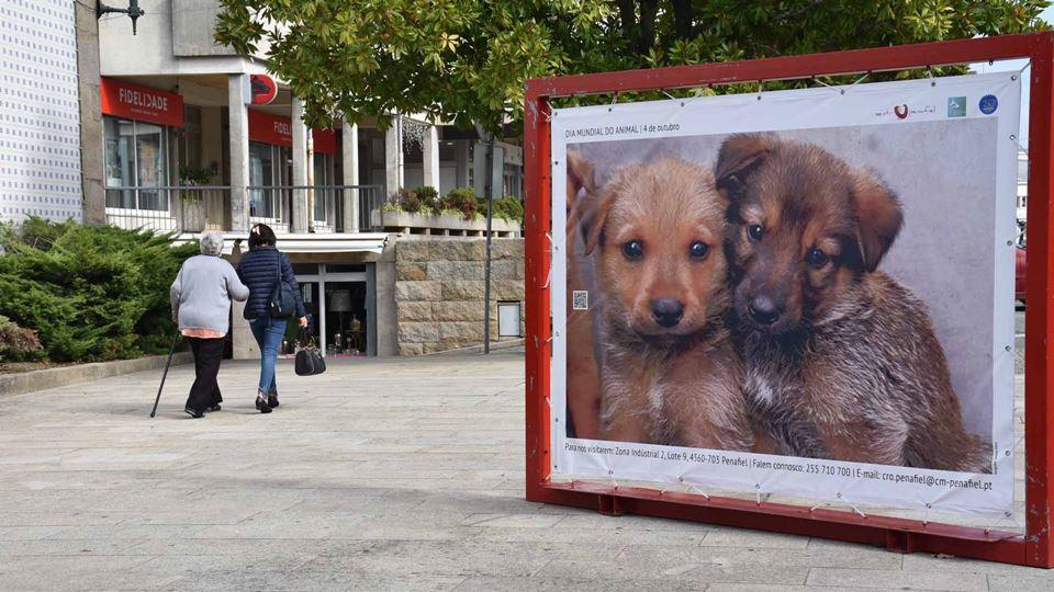 Cartaz de cães nas ruas de Penafiel