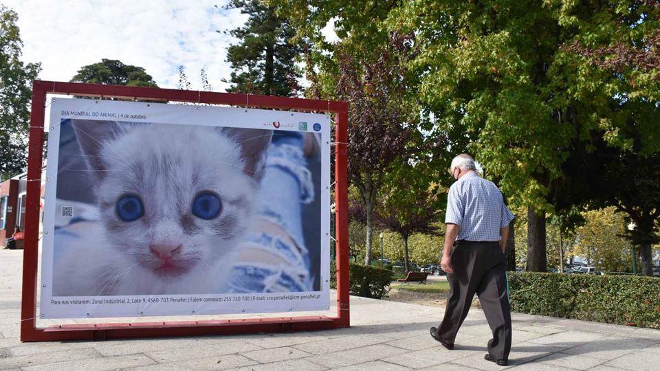Cartaz de gato em Penafiel
