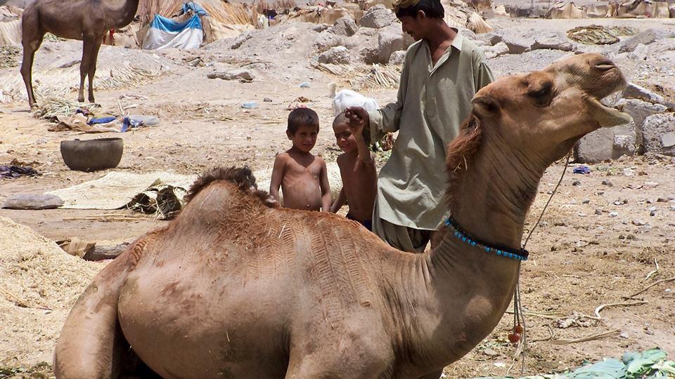 crianças com camelo paquistão
