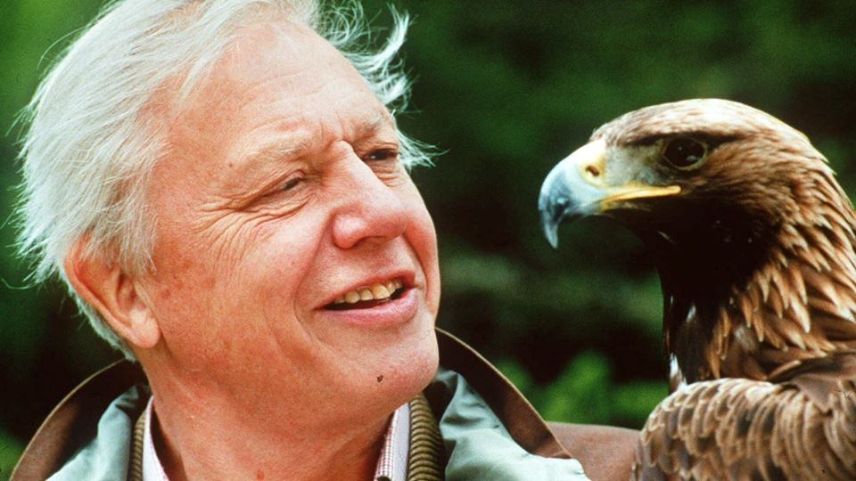 David Attenborough cria Instag...