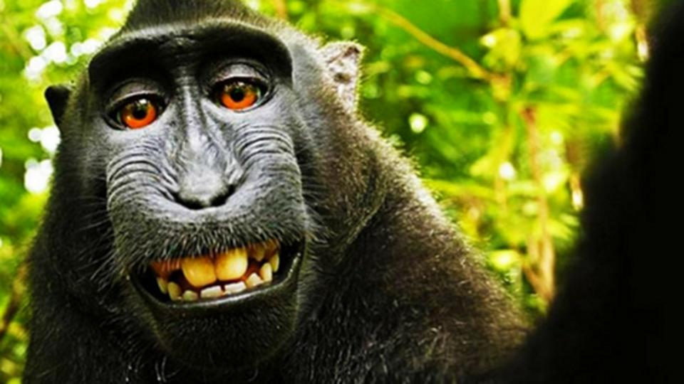 """O mistério da """"selfie"""" do maca..."""