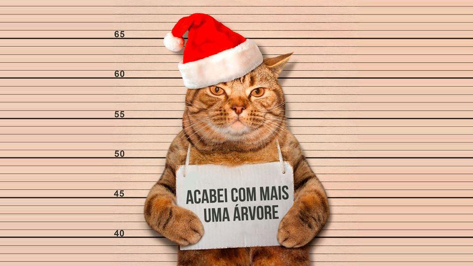 Gatos VS Natal. Uma guerra ond...