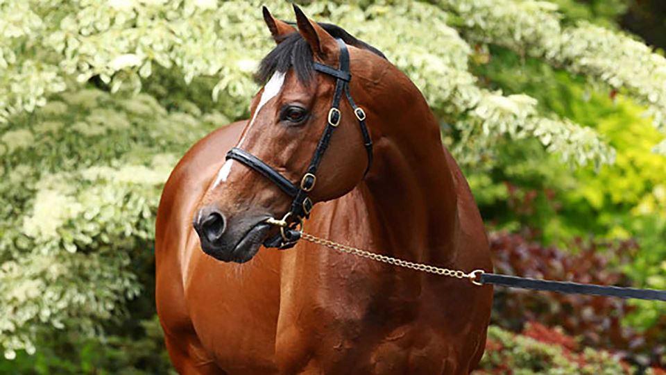 Este cavalo é um dos mais caro...